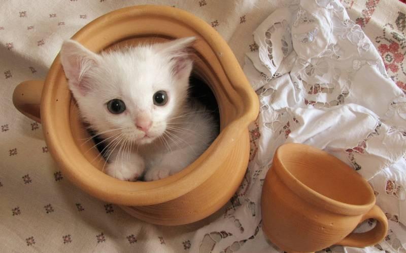 poze pisici (54)