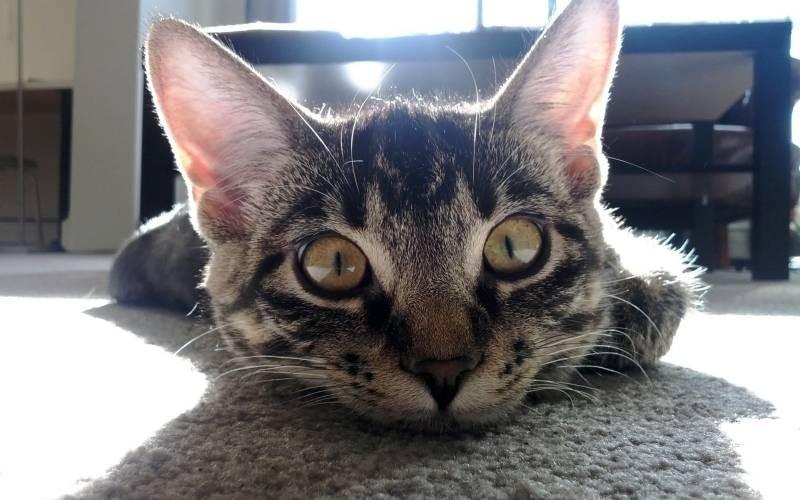 poze pisici (55)