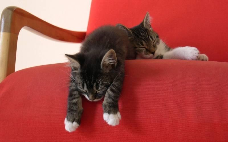 poze pisici (57)