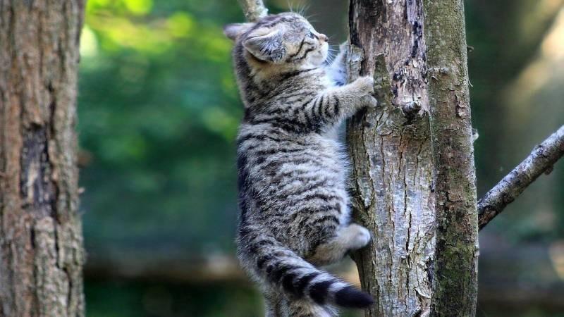 poze pisici (58)