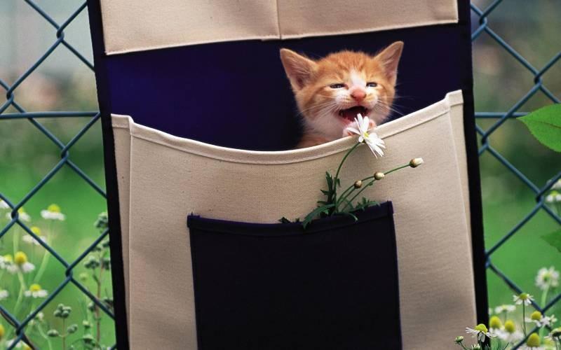 poze pisici (61)