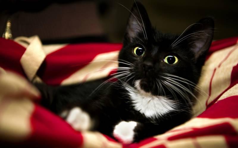 poze pisici (62)