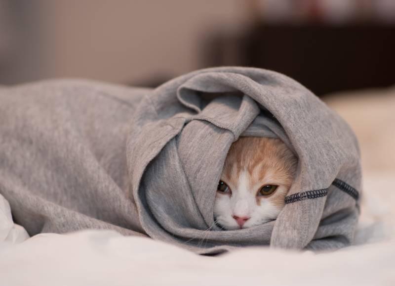 poze pisici (63)