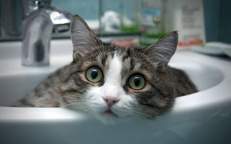 poze pisici (64)