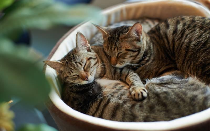 poze pisici (67)