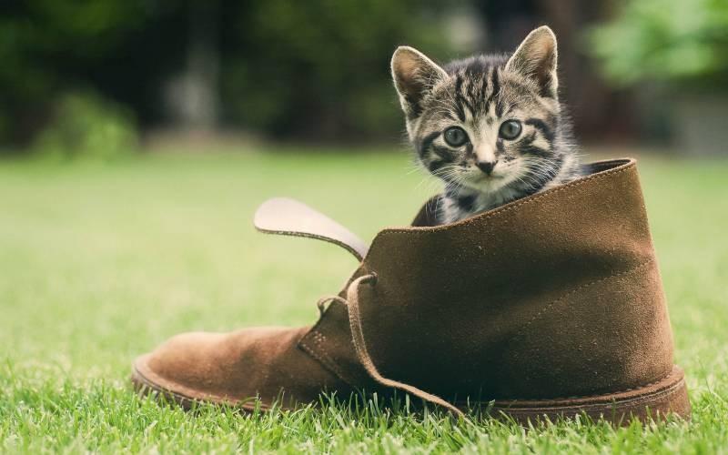 poze pisici (68)