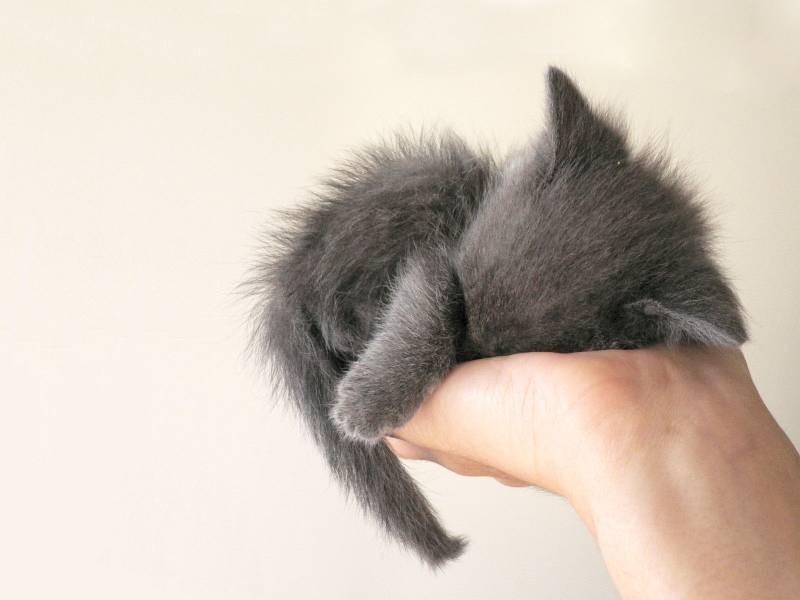 poze pisici (7)