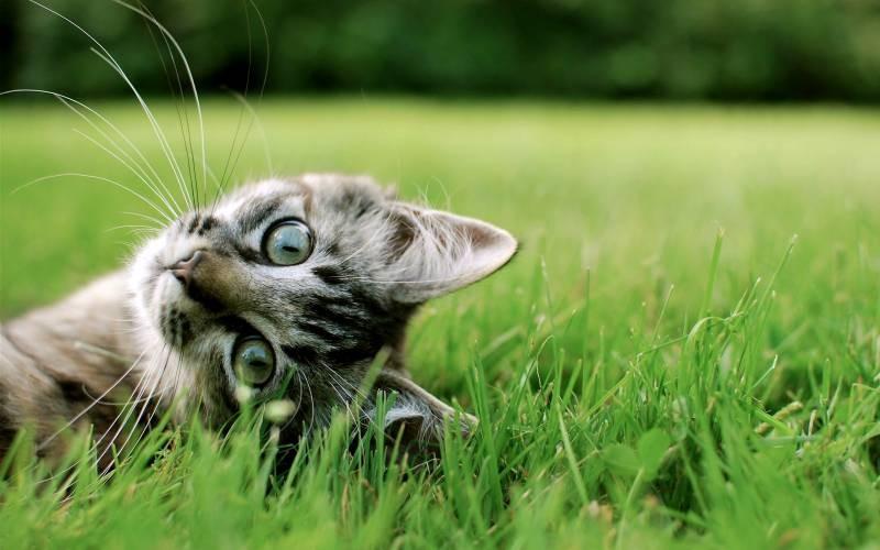 poze pisici (70)