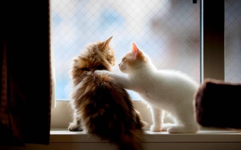 poze pisici (71)