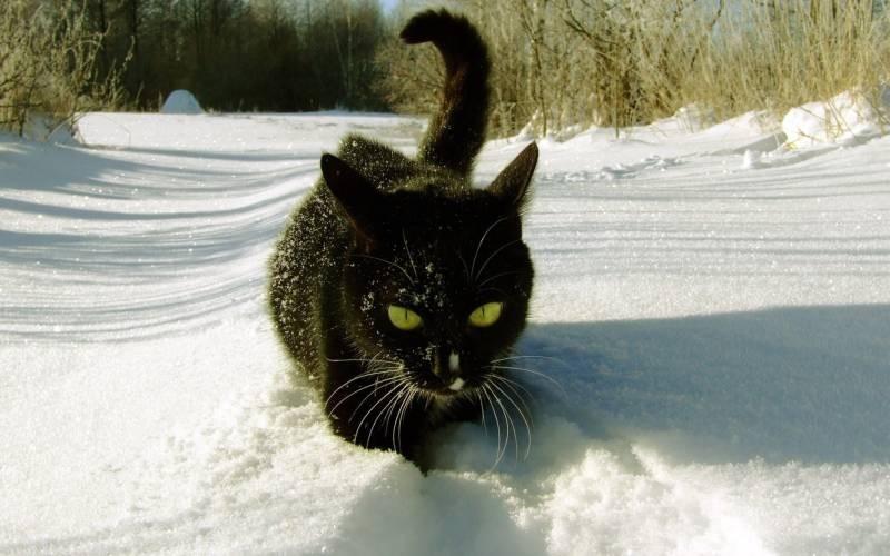poze pisici (72)