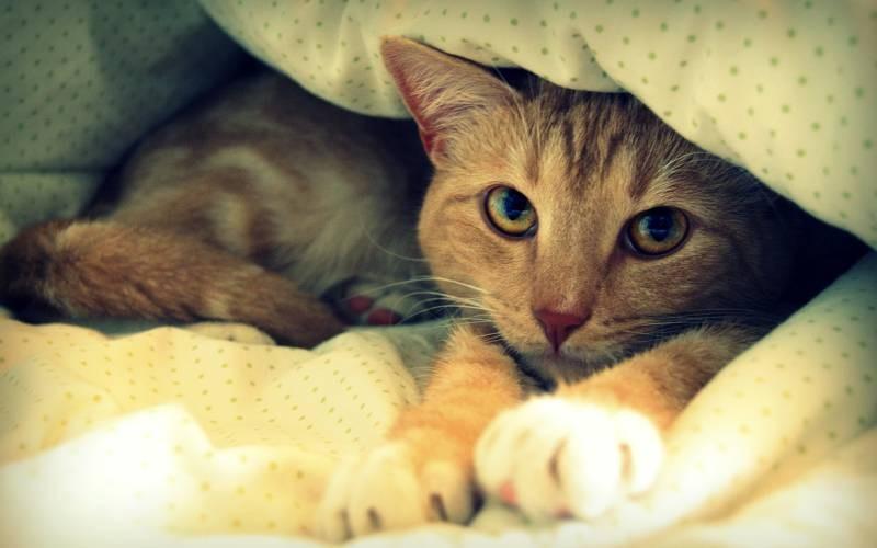 poze pisici (73)