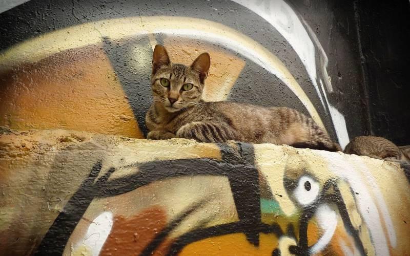 poze pisici (74)