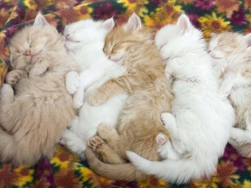 poze pisici (75)