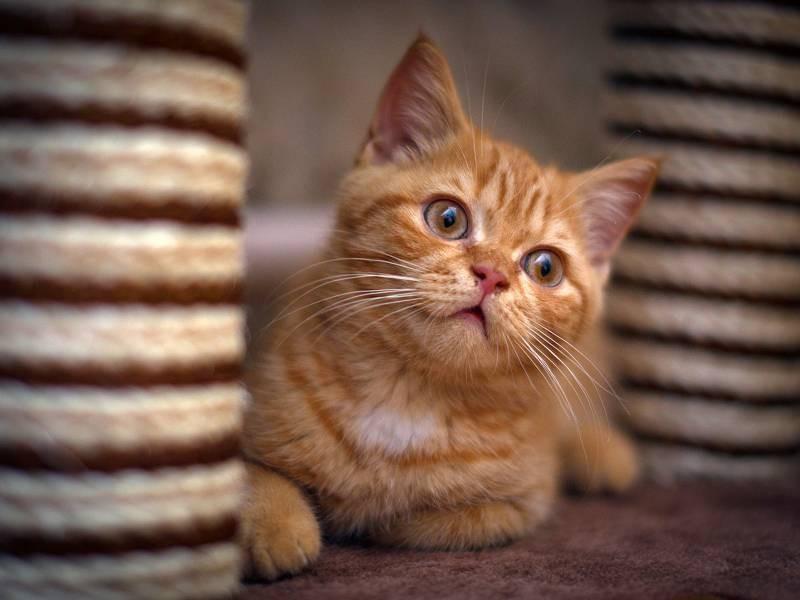 poze pisici (76)