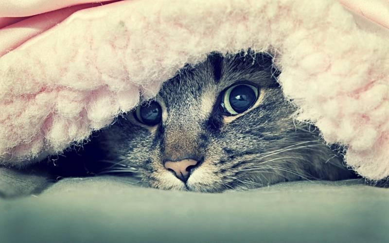 poze pisici (77)