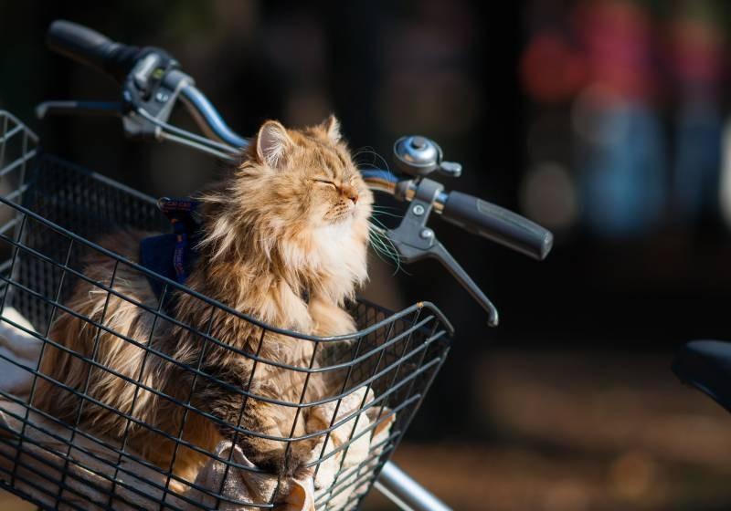 poze pisici (79)