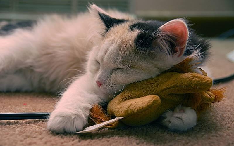 poze pisici (8)