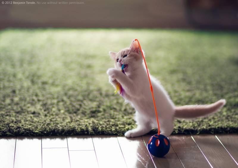 poze pisici (81)