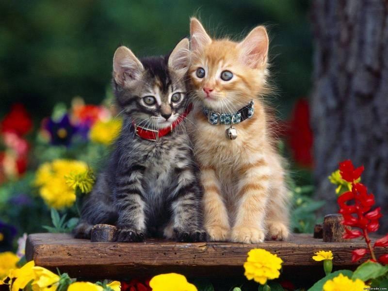 poze pisici (84)