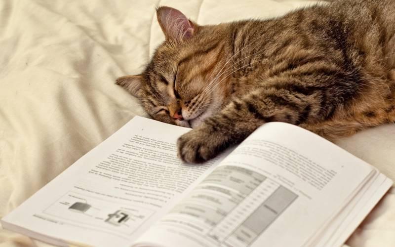 poze pisici (85)