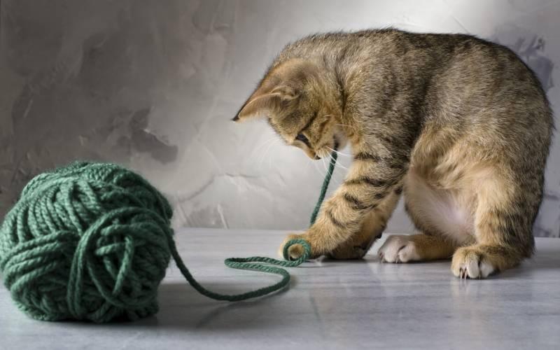 poze pisici (86)