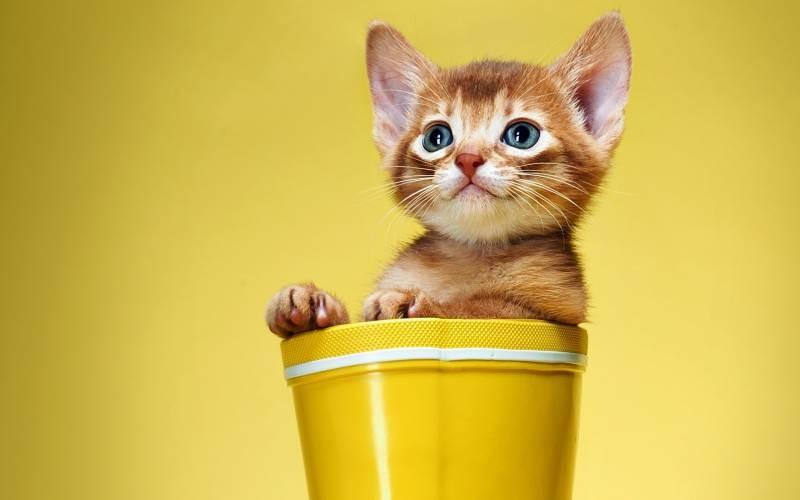 poze pisici (87)