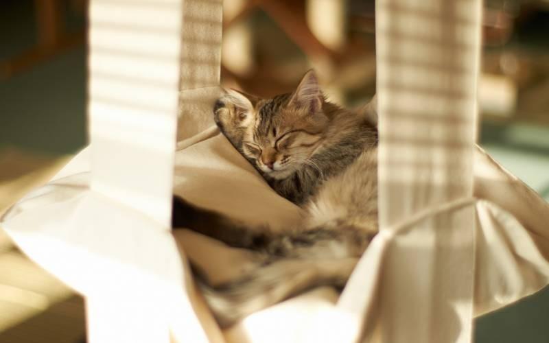 poze pisici (88)