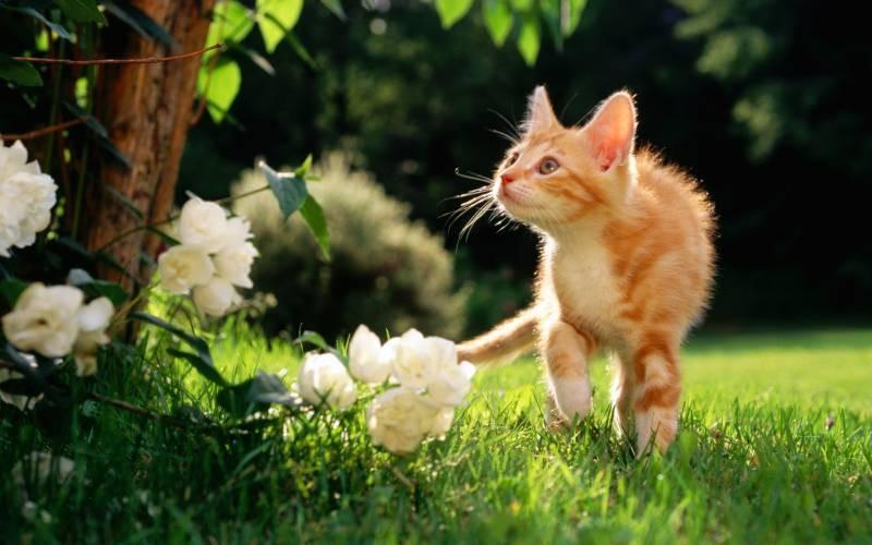poze pisici (9)
