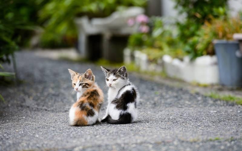 poze pisici (90)