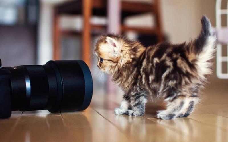 poze pisici (91)