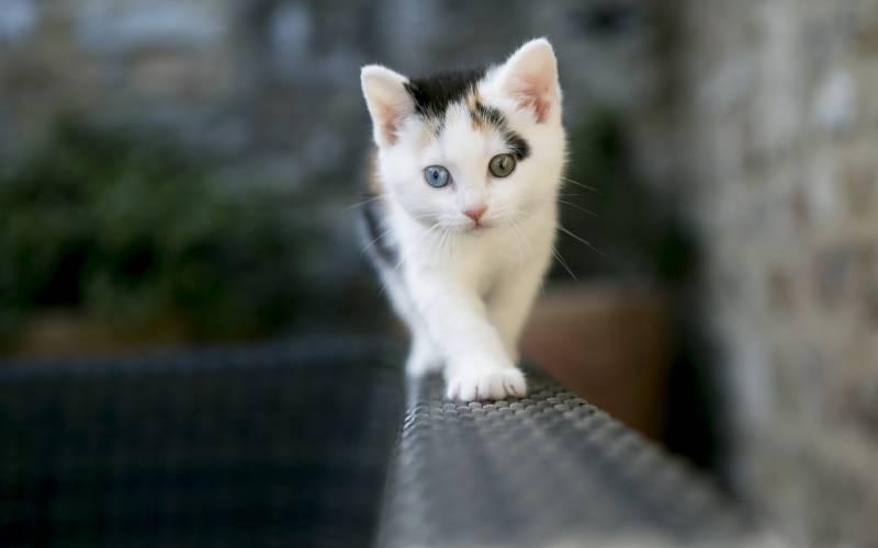poze pisici (92)