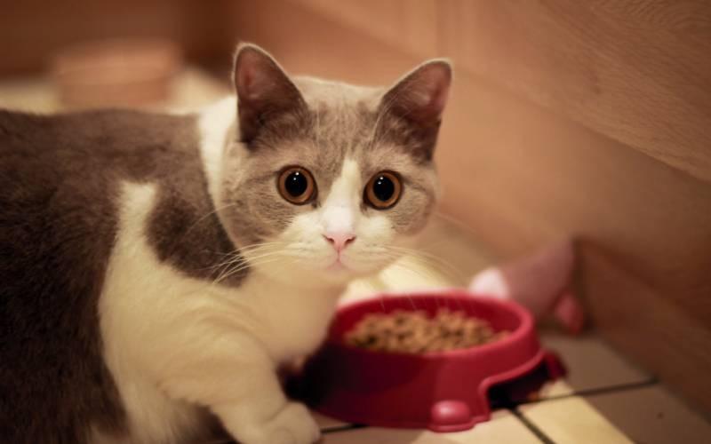 poze pisici (93)