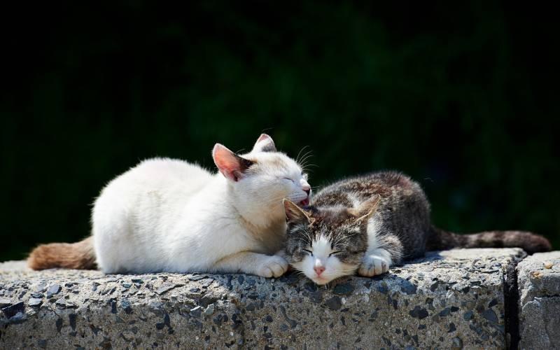 poze pisici (94)