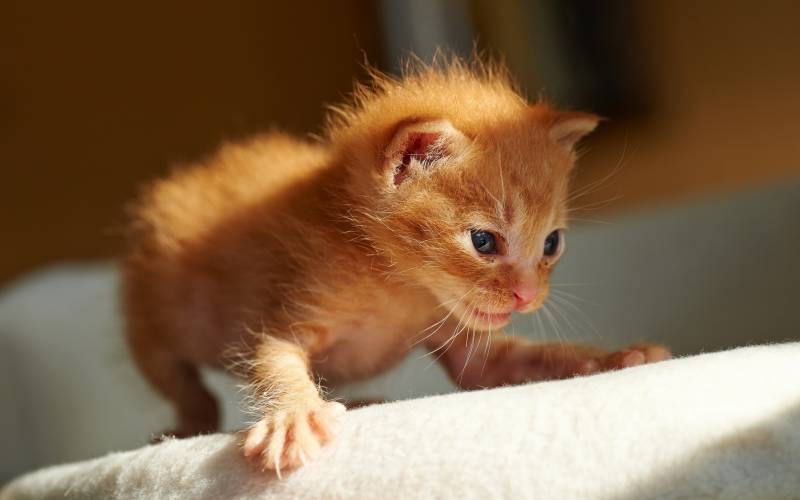 poze pisici (95)