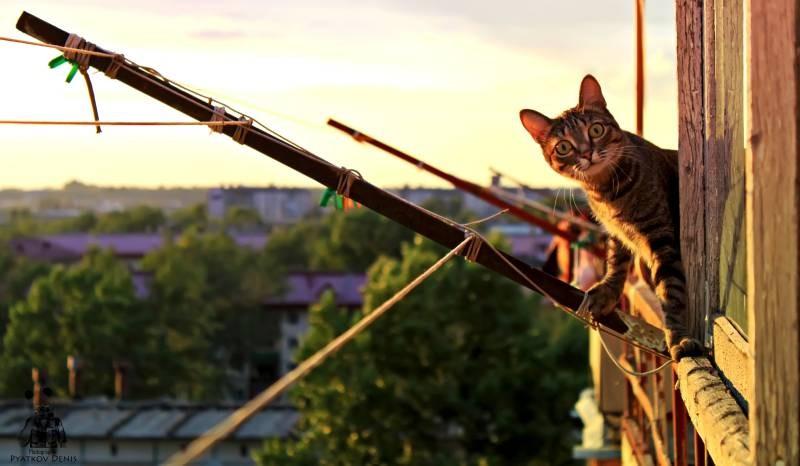 poze pisici (96)