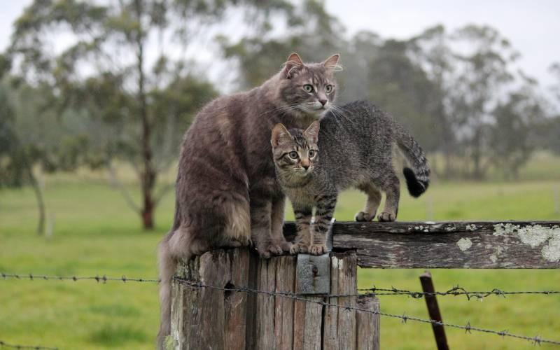 poze pisici (98)