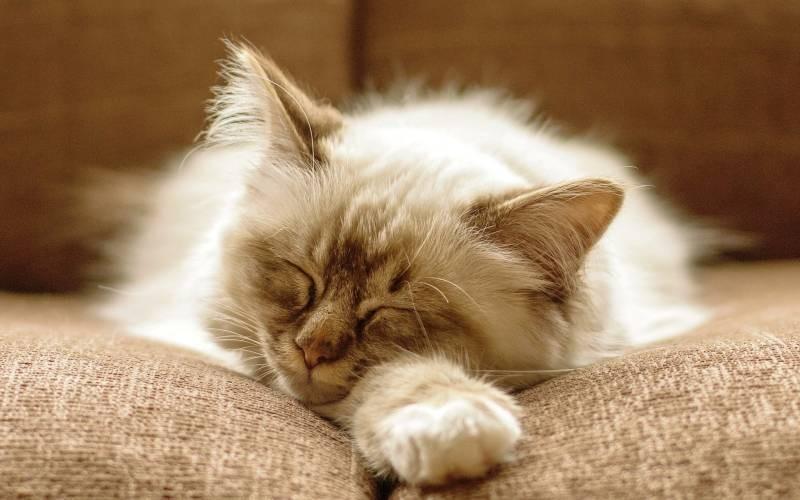 poze pisici (99)