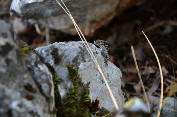 Cazanele Dunarii Ciucarul Mare (16)