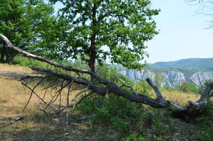 Cazanele Dunarii Ciucarul Mare (21)