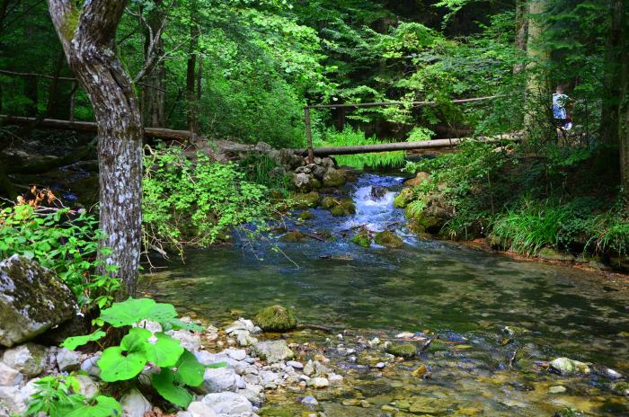 Lacul Ochiul Beiului Cheile Nerei (4)
