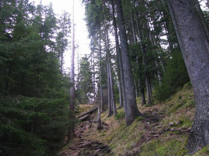 Traseu Lacul Rosu Suhardul Mic (13)