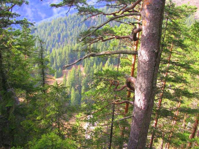 Traseu Lacul Rosu Suhardul Mic (15)