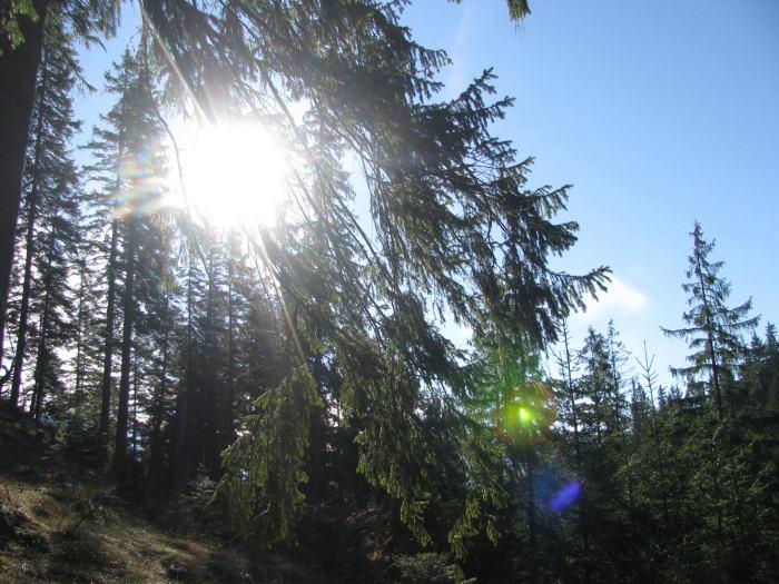 Traseu Lacul Rosu Suhardul Mic (20)