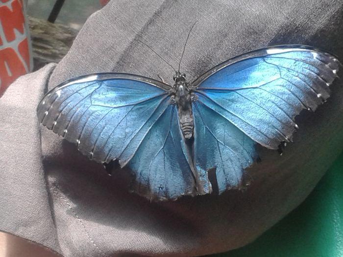 fluturi Bucuresti (3)