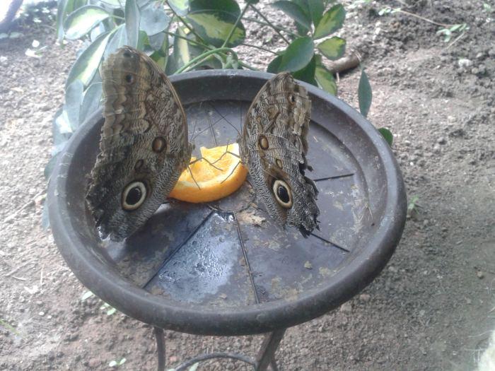 fluturi Bucuresti (8)