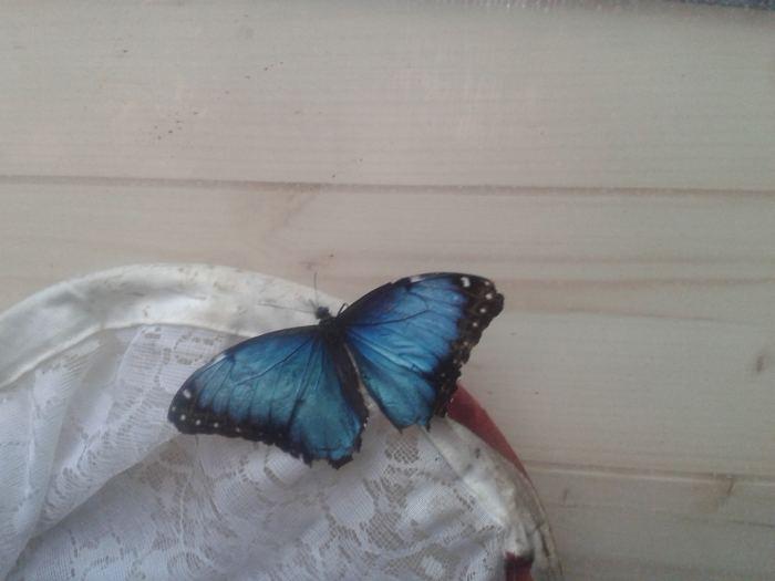 fluturi Bucuresti (9)