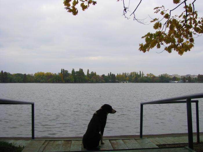 parcul Herastrau (12)