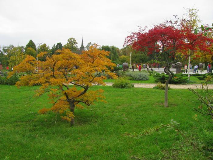 parcul Herastrau (13)