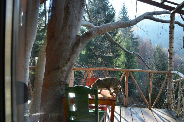 casuta din copac Predeal (10)