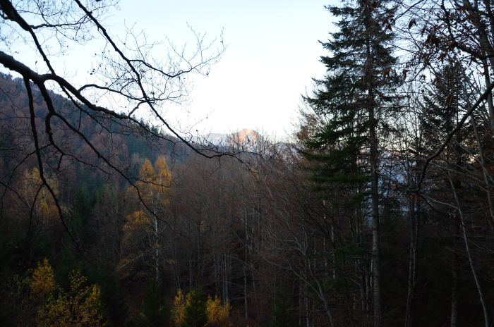 casuta din copac Predeal (4)